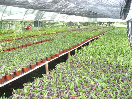 Inv 5 lleno de plantulas