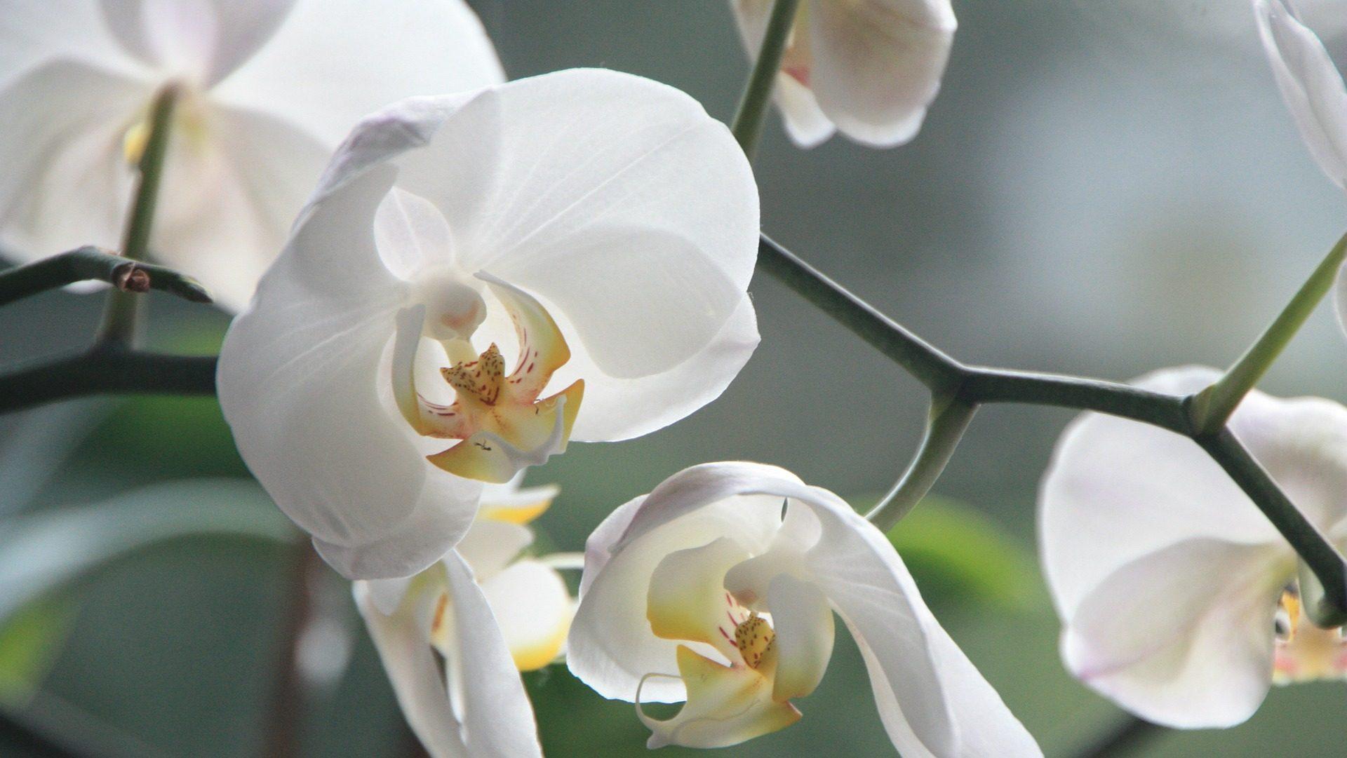 Orquídeas Rio Verde
